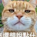 喜羊羊's avatar