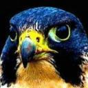 Peregrino's avatar