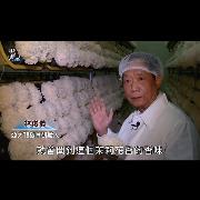 台灣原生菌種⭐亞大T8銀耳⭐榮獲台中市好禮標章