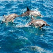 前往神秘「龜山島」▸和鯨豚共遊享受夏日輕旅行>