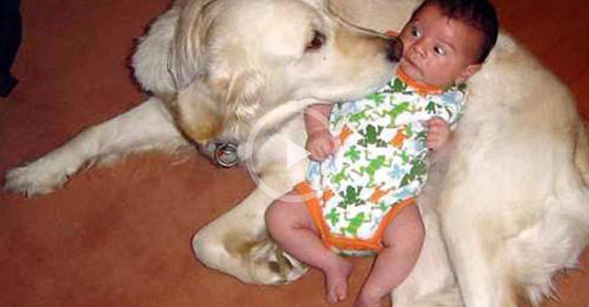 Parents Baby Cam Caught Dog Alone With Toddler..