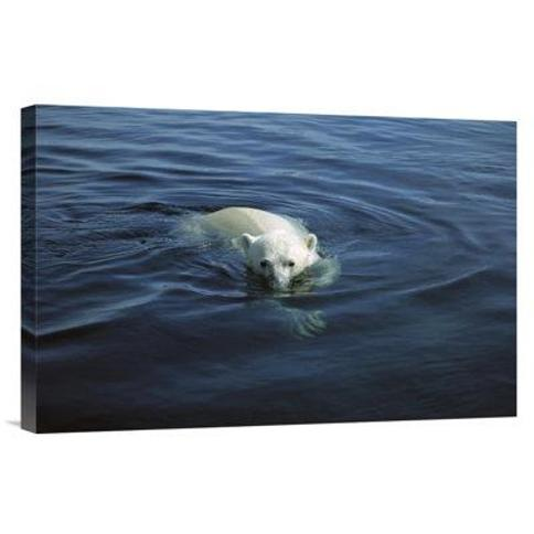 """East Urban Home 'Polar Bear Swimming Wager Bay Canada' Photographic Print FBBD9063 Format: Wrapped Canvas Size: 16"""" H x 24"""" W"""