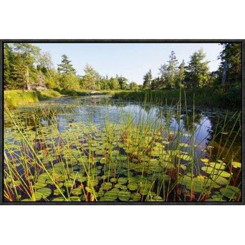 "East Urban Home 'Marsh With Reeds And Lily Pads Surrounding A Pond West Stoney Lake Nova Scotia Canada' Framed Photographic Print FBBD8852 Size: 16"" H x 24"" W x 1.5"" D"
