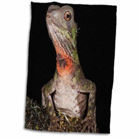 Symple Stuff Hardage Guichenots Dwarf Iguana Lizard Amazon Ecuador Pete Oxford Hand Towel X112380726