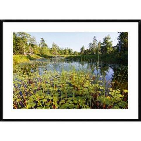 Global Gallery 'Marsh with Reeds and Lily Pads Surrounding A Pond West Stoney Lake Nova Scotia Canada' Framed Photographic Print DPF-397614-2436-266