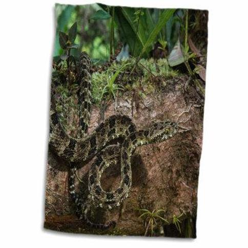 East Urban Home Eliza Speckled Forest Pit Viper Amazon Ecuador Captive Hand Towel X111134910
