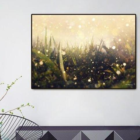 "Curioos Hidden in The Magic Garden by Richard Davis Framed Graphic Art S_PR00013509_FAB / M_PR00013509_FAB Size: 20"" H x 28"" W x 2"" D"
