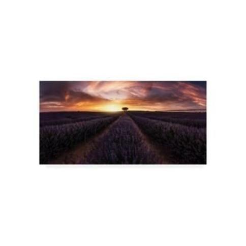 "Jorge Ruiz Dueso Lavender Sunset Canvas Art - 20"" x 25"""