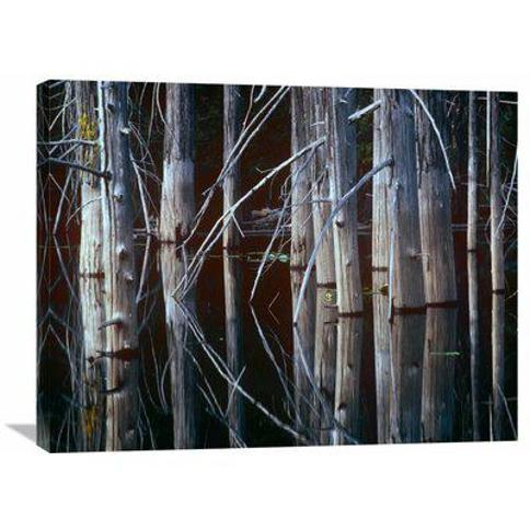 "East Urban Home 'Western Red Cedar Trees Oliphant Lake British Columbia Canada' Photographic Print on Wrapped Canvas HDT-407773- Size: 24"" H x 32"" W x 1.5"" D"