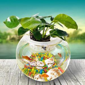 圓型小魚缸圓形金魚缸玻璃桌面創意魚缸烏龜缸小型      瑪奇哈朵