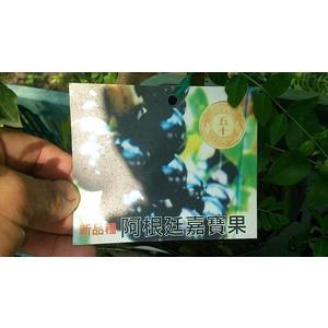 ** 阿根廷樹葡萄 (非嫁接苗) ** 4.5吋盆/高20-30cm OvO