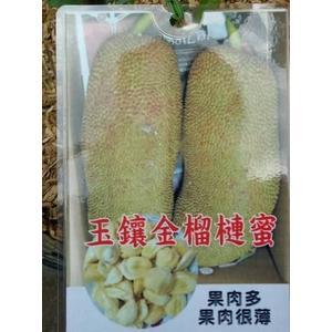 水果果苗 ** 玉鑲金榴槤蜜 **4吋盆/高20-30公分 /氣味很濃【花花世界玫瑰園】S