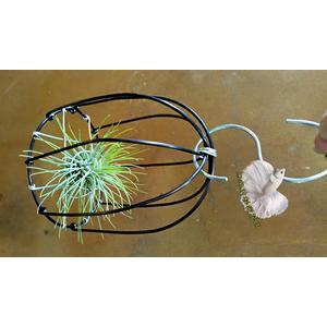 手作 鋁線鳥籠+空氣鳳梨 [小紅寶石] 整組出售 活體空氣鳳梨 空鳳植栽 需通風良好