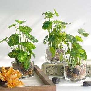 紫藤世紀北歐模擬植物小盆栽綠植擺件假植物客廳擺設裝飾花藝盆景 港仔會社