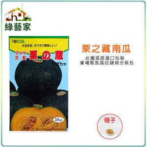 【綠藝家】大包裝G47.栗子南瓜種子15顆(栗の藏)