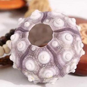 地中海,天然粉紅海膽殼,心型貝殼