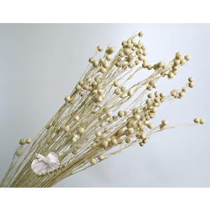 乾燥花迷你相思豆花束 真花乾燥製成 ☆插花.天花板裝飾, 居家.店面.櫥窗擺飾.園藝☆