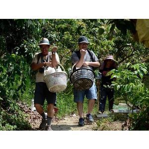 [台南]採果體驗-蜜旺果舖〔7-8月芒果、全年度芭樂〕