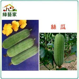 【綠藝家】大包裝G15.絲瓜種子33克(約300顆)