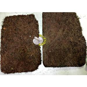 [蛇木板] 蘭花。鹿角蕨。多肉植物專用 可以自己組裝植物。並掛繩子固定於牆上