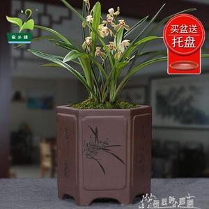 花盆陶瓷室內古典四方形六方形中等蘭花盆君子蘭盆景盆花盆  奇思妙想屋