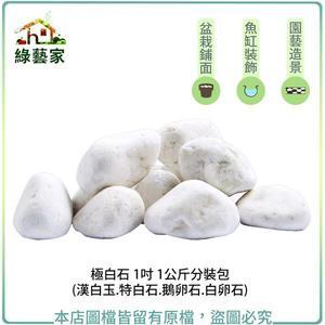 【綠藝家】極白石 1吋 1公斤分裝包 (漢白玉.特白石.鵝卵石.白卵石)