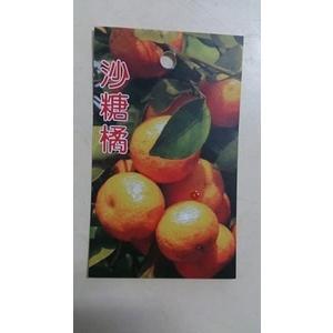 水果苗 ** 砂糖橘 (沙糖橘) ** 1尺盆/高130-140cm/甜度可達14度【花花世界玫瑰園】m