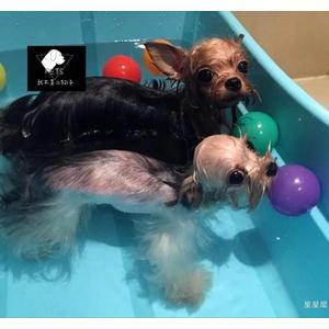 狗狗泰迪小型犬專用洗澡盆spa藥浴桶可折疊大型加厚寵物浴缸用品【免運直出】