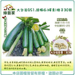 【綠藝家】大包裝G51.綠櫛瓜(輝青)種子30顆