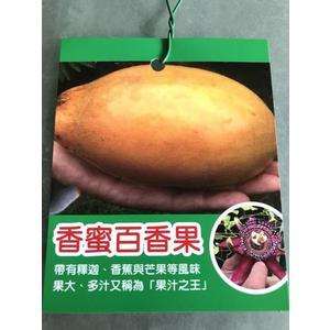 水果苗 ** 香蜜百香果 ** 4 吋盆/ 高30-50公分/新品水果.香甜好吃【花花世界玫瑰園】R