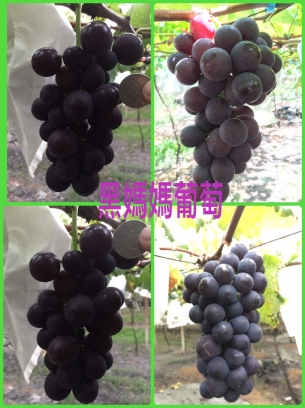 黑媽媽葡萄