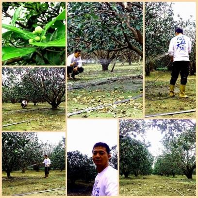 麻吉柚果園