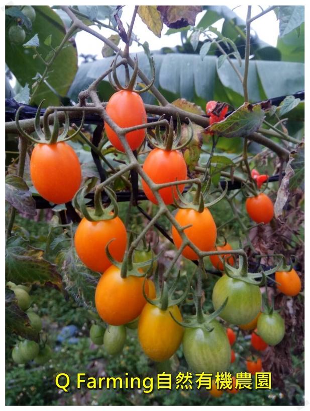 Q Farming自然有機農園