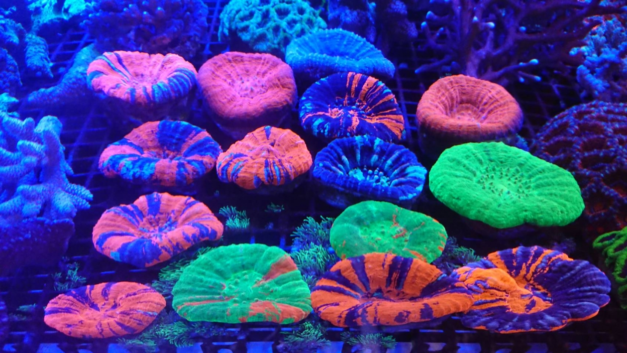 說給海聽珊瑚專賣店