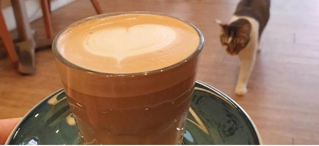 Coffee Talks頭靠咖啡