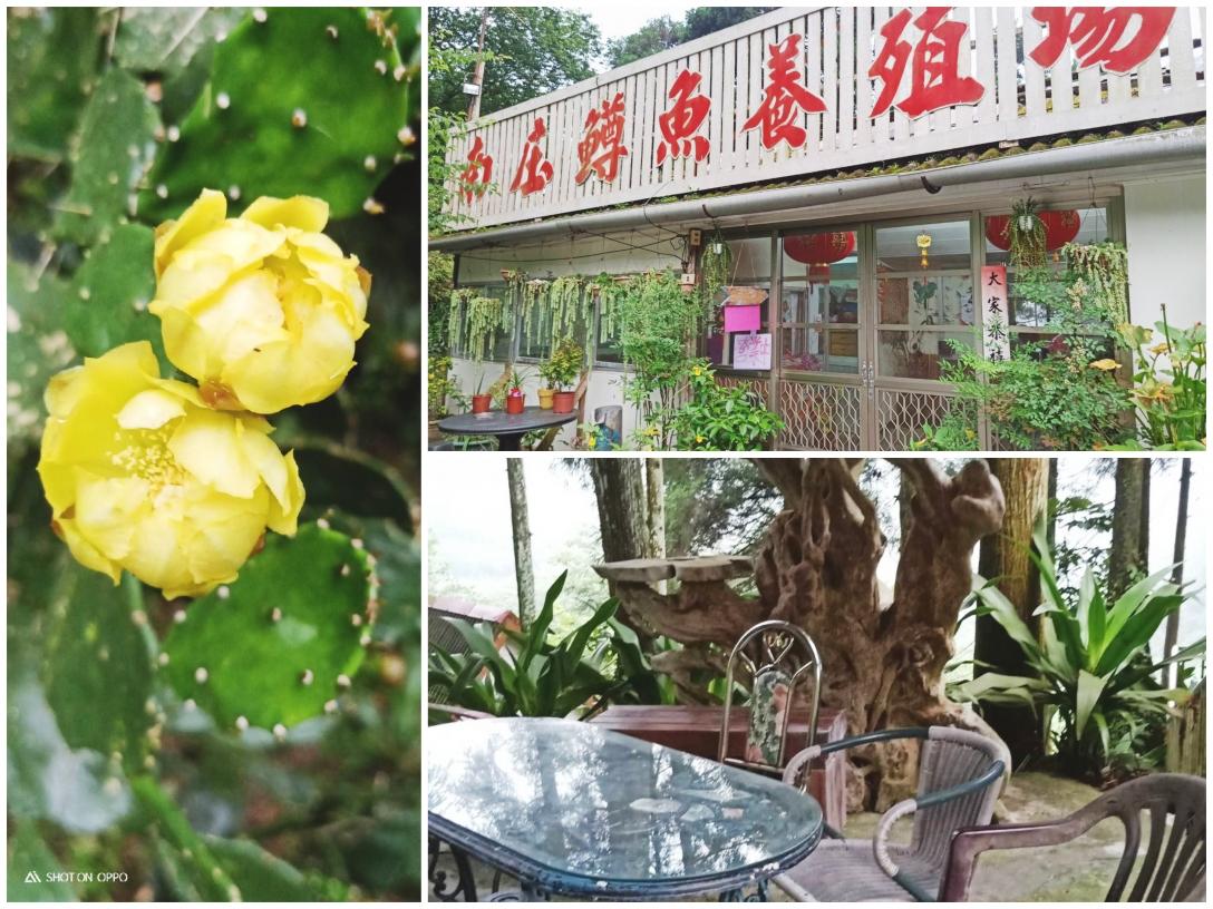 南庄鱒魚養殖場(創始店)