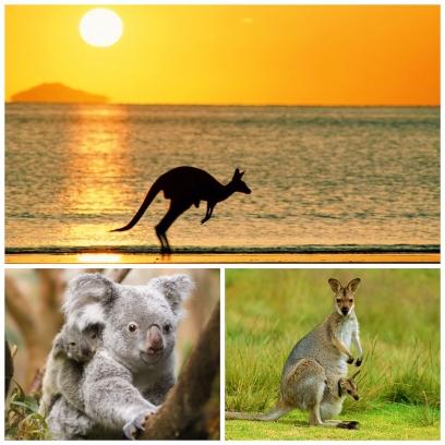 ACIC澳洲留學顧問中心