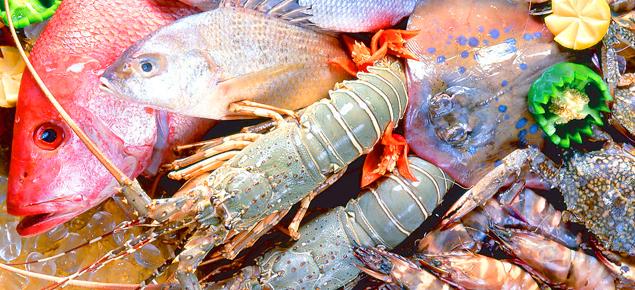東宴魚翅海獵人水產