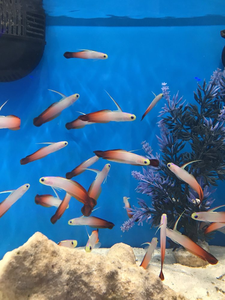 The Aquarium King in Fort Lauderdale   The Aquarium King ...