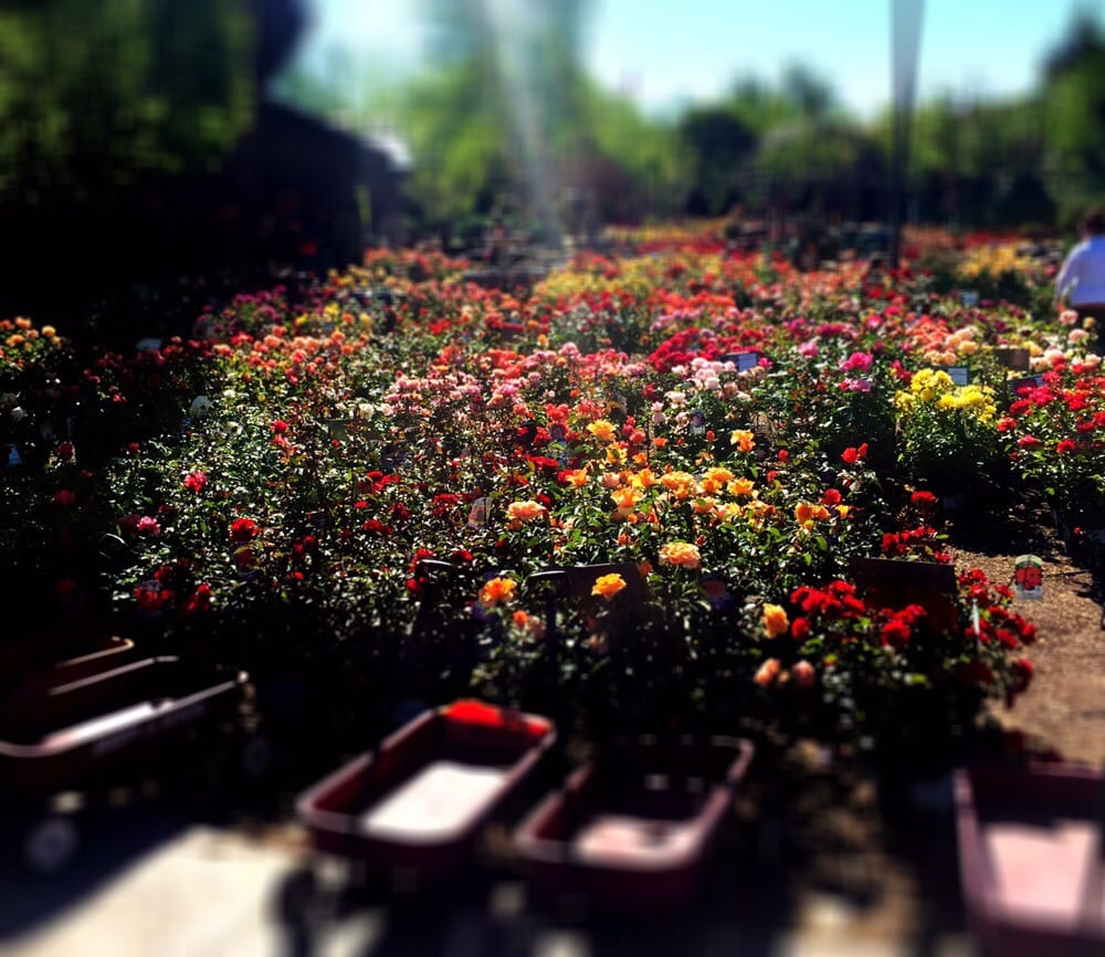 The Gardens 9542 S University