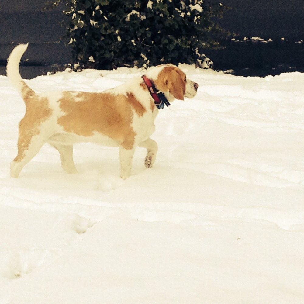 Dog Cancer - Symptoms, Diagnosis & Treatment