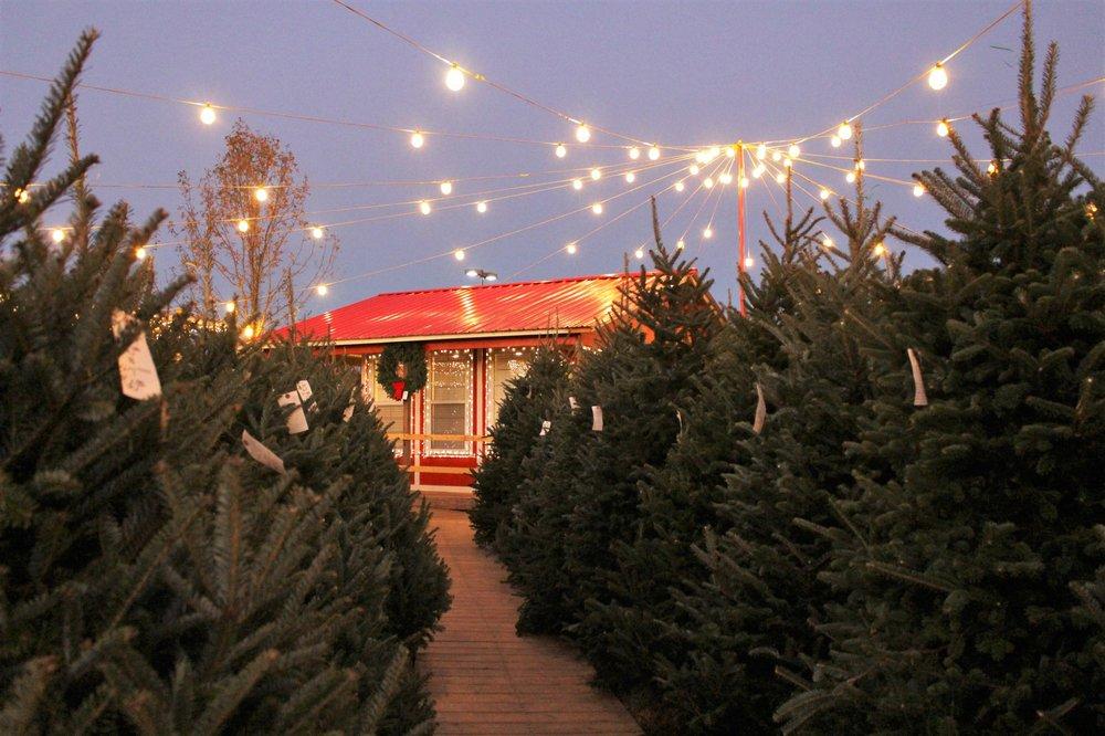 TROSA Christmas Tree Lot in Durham