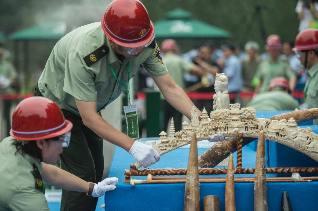 China crushes half a tonne of ivory in symbolic gesture