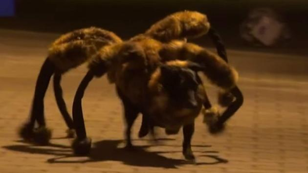 Most Watched Youtube Video  Spider Dog