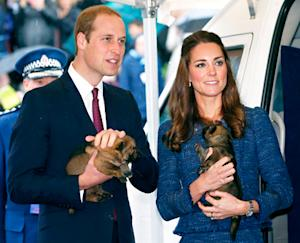 Kate Middleton, Prince William Pose With Adorable Police Puppies in New Zealand: Pictures