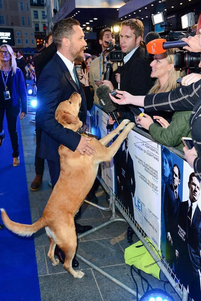 <p>四、湯姆哈迪(Tom Hardy):《猛毒》英國男星湯姆哈迪是個標準的愛狗狂,經常在社群網站上分享自己與狗兒的親密照,甚至在路上看到別人家的狗,也會蹲下來互動一番。而他的愛犬之一伍士塔克(Woodstock)是他在路邊撿回家的流浪狗,曾跟著湯姆哈迪出席了不少電影首映活動。不過伍士塔克已在2017年過世,湯姆哈迪也在IG上發佈了消息,並放上自己跟伍士塔克的合照,表示會永遠懷念牠。(圖:《金牌黑幫》英國臉書) </p>