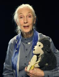 "Primatologist and environmental activist Dr. Jane Goodall is shown with her traveling companion ""Mr. H,"" a stuffed toy chimpanzee that travels everywhere with her, during an interview Thursday, Sept. 15, 2011 in New York. Goodall is one of several global experts featured in the new documentary ""Surviving Progress,"" inspired by the best-selling book, ""A Short History of Progress."" (AP Photo/Kathy Willens)"