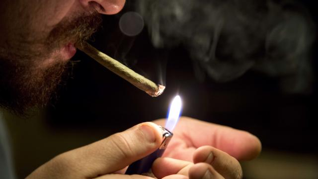 'Bud & Breakfasts' try to keep high profits from going to pot
