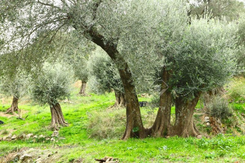 Germogli di crescita in Grecia. Ma è davvero primavera?