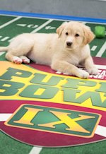 Puppy Bowl IX | Photo Credits: Animal Planet